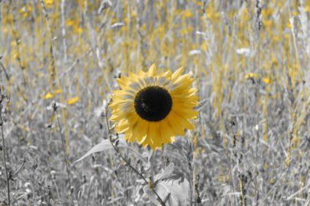 «Солнце в диком поле» Автор фото: Елена Лактионова