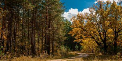 «Лесной парк «Дружба» Автор фото: Борис Пучков